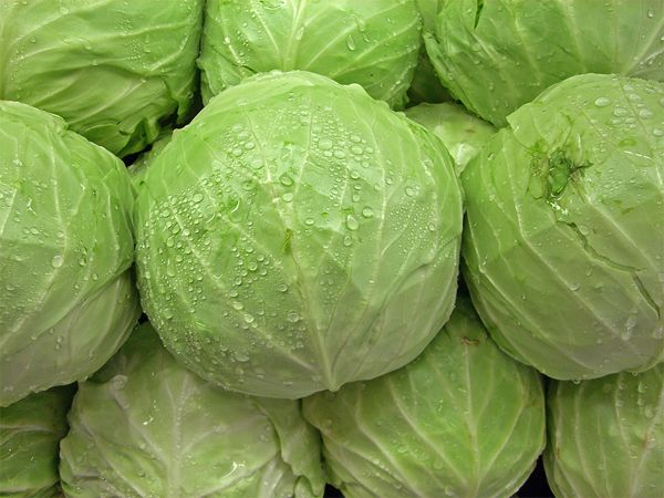 Eating cabbage benefits for health and beauty