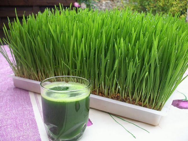 Amazing wheatgrass health benefits