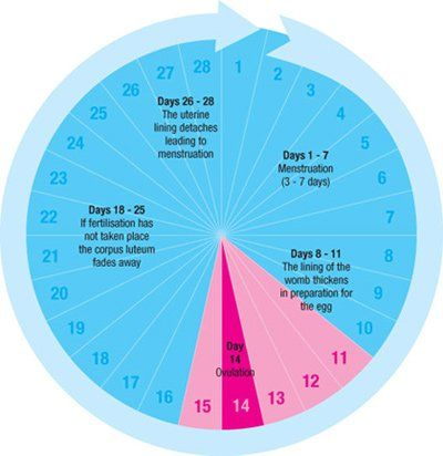 Which day is perfect in a month to conceive - find the ovulation period?
