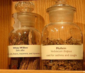 White Willow Bark Remedy for Migraine
